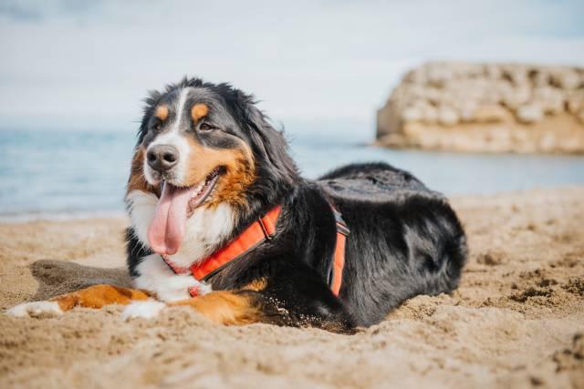 Casas Rurales Que Admiten Perros Naturaki